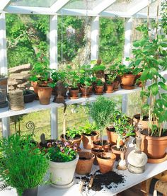 how I envision the inside of the greenhouse :) Garden Shed Interiors, Greenhouse Interiors, Greenhouse Gardening, Container Gardening, Garden Trees, Garden Pots, Garden Center Displays, Wooden Greenhouses, Garden Nursery