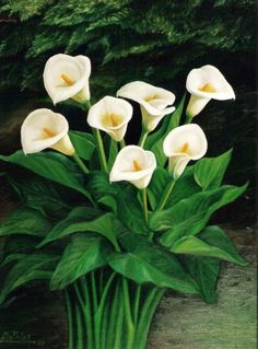The video consists of 23 Christmas craft ideas. Lily Painting, Easy Canvas Painting, Calla Lillies, Calla Lily, Most Popular Flowers, Flora Flowers, House Plants Decor, Garden Inspiration, Flower Art