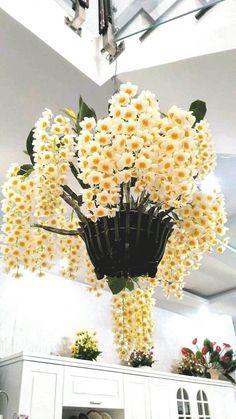 Help Make Your Garden Special - Easy Garden Plants Unusual Flowers, Amazing Flowers, Beautiful Flowers, Orchid Flower Arrangements, Orchid Plants, Garden Plants, House Plants, Hanging Orchid, Orquideas Cymbidium