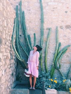 Giant cacti, flowers and plants: italy and france.