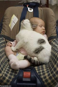 """""""Ahhh. My People were so nice to get me this compact human to use as my new seat warmer."""""""