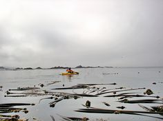"""""""Solitude out beyond life's entanglements - kayaking in Mendocino"""", from rjccski via Flickr."""