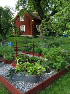 Punainen talo ja kasvimaa