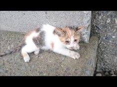 Man Saved Kitten He Saw Fall From a Bridge - We Love Cats and Kittens. AMAZING VIDEO of their recovery!