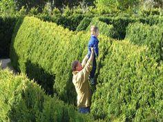Mintaro Garden Maze, Mintaro, Clare Valley, South Australia  Definitely cheating :-)  #maze #labyrinth