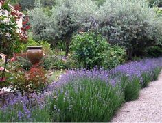 images about Mediterranean gardens on Pinterest