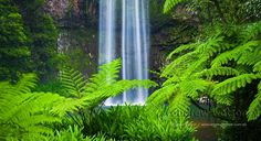 Millaa Millaa Falls photographed using a slow shutter speed to give that silky- water look, and including ferns for foreground interest. 60mm focal length, ISO 200, f11 @ 1 sec