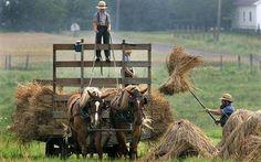 .haying.