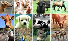 Samaadhi Foundation of India to Benefit Humans and Animals
