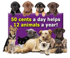 USA: #GivingTuesday Kits for homeless animals being fostered - Donate Now   Rescue Operation for Animals of the Reservations