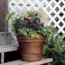 Risultati immagini per container+gardening