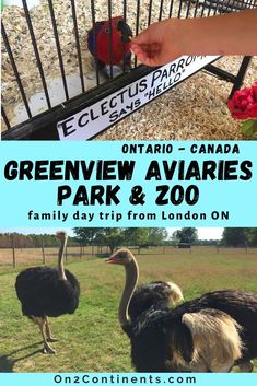 Great day trips around London, Ontario - Family trip to Greenview Aviaries Park & ZOO in south-western Ontario. All you need to know before you visit. #greenviewzoo #greenviewaviariesparkandzoo #ontario #familytrips #roadtrip #thingstodowithkids #londonontario #on2continents Family Day, Day Trips, Family Travel, Ontario, Places To See, Road Trip, Canada, London, Park