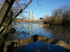 Lady Bird Lake is the center of the city and usually the center of each of our visits.  No matter your fitness level, this is a spot that you should stroll, jog, bike or take the dogs.