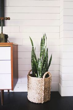 Five EASY To Care For Houseplants snake plant … - House Plants Plant Basket, Basket Planters, Baskets For Plants, Plant Pots, Indoor Garden, Indoor Plants, Home And Garden, Indoor Herbs, Interior Plants