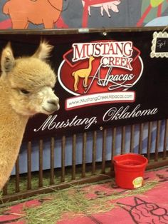 Venture into Mustang Creek Alpaca Company for soft fleece goods and unique Made In Oklahoma products. Pick up scarves, stuffed animals and vintage furniture at this Oklahoma City shop.