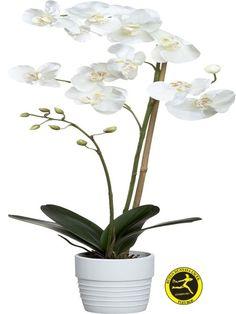 Kalbimde Orkidemsin