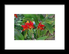 orchid, orange, flower, bloom, blossom, nature, garden, michiale, schneider, photography