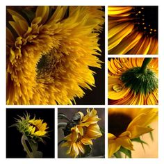 Yellow and sunflowers