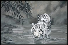 Torrit the Tiger 18 x 12 White Tiger in Water by LaurasWildLife, $30.00