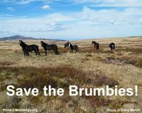 Stop Killing the Brumbies | Please SIGN and share petition. Thanks.