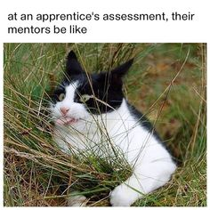 At an apprentice's assessment, their mentors be like
