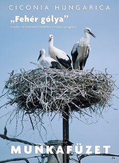 Ciconia Hungarica munkafüzet- Fehér gólya - Kiss Virág - Picasa Webalbumok Bald Eagle, Kiss, Album, Books, Picasa, Libros, Book, Book Illustrations, Kisses