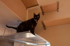 Ceiling and wall walkway for cats made from IKEA stuff
