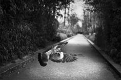 Vie / Raphaël Année | Photographie