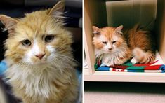 He managed to escape his new home and set out on a journey back to the home he used to know – walking 12 miles until he was there again!