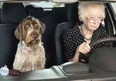 Comment traiter le mal de transport du chien ou du chat .