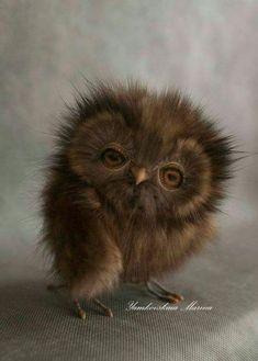 Cute lil owl face