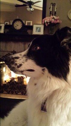 """Pose McKenna"" ...good doggie. One of her many tricks :)"