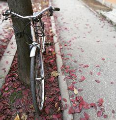 Bike - © Dana Cristea   Instagram: https://www.instagram.com/p/Bbr3iKXjn6g/?taken-by=danaaacristea
