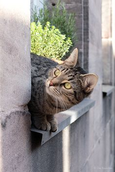 Die Raumfee: Die Katze(n) auf dem (heißen) Blechdach.
