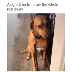 Video by TikTok/tromcms🎥 Cute Funny Dogs, Funny Dog Memes, Funny Dog Videos, Cute Funny Animals, Hilarious Sayings, Dog Humor, 9gag Funny, Memes Humor, Funny Signs
