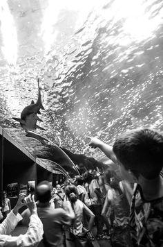 #Discovery in blacknwhite.@Cretaquarium @VisitGreecegr @DiscoverGRcom @myhersonissos @destination_c #cretaquarium #lp Lp, Discovery, Concert, Twitter, Unique, People, Concerts, People Illustration, Folk