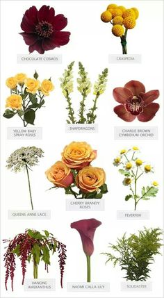 Flowers and their names because I don't know the names of any flowers!