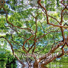 photo giclee Honolulu zoo trees Hawaii nature photography
