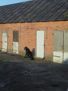 Gawęda jak nasze psy i koty: Borys i Czaruś w porannym słońcu Psy, Shed, Outdoor Structures, Plants, Literatura, Plant, Barns, Sheds, Planets