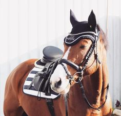 Jumper, cool horse!
