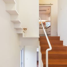 "Ever wondered what your cat gets up to when you're not at home? The answer is ""plenty"" in these six examples of homes with feline-friendly features – including elevated walkways, stepping-stone shelving and discrete doorways."