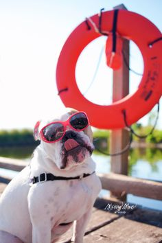 I just love this! Pet Photography | Dog | Fun Photo Session Ideas | Props | Portraits | Bulldog | Puppy | Beach | Summer