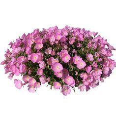 cutout flowers: pink flowers