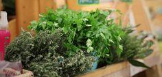 1) Rozmarýn – Kořínky dřevité bylinky rozmarýnu potřebují obvykle trochu více času na svůj rozvoj. V období jara obvykle rostourychleji. Rostlinku umístěte na slunném místě. 2) Šalvěj – Vezměte odřezky na jaře (nebo z koupené živé rostlinky v jiném ročním období) a vložte je do vody. Umístěte ji na světlé místo v dobře větrané místnosti, … Parsley, Pesto, Herbs, Garden, Fitness, Organic Fertilizer, Annual Flowers, Herbs Garden, Small Gardens