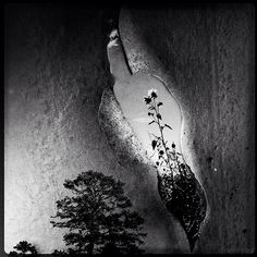 Richard Smith explores unexpected interrelationships between everyday images through surrealist photomontage. Ap Studio Art, Art Sites, Nature Plants, Fantasy Paintings, Creative Photography, Digital Photography, Photomontage, Photo Manipulation, Cool Photos