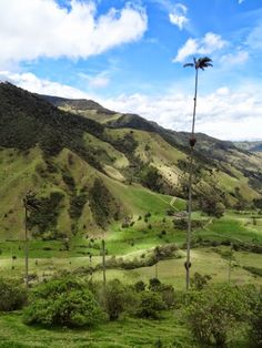 Salento, Colombia is home to a pretty unique wonder of nature- the world's largest palm trees. Check out our favorite pictures in this one! World Pictures, Natural Wonders, Palm Trees, Worlds Largest, Places To See, Golf Courses, Country Roads, Landscape, Nature