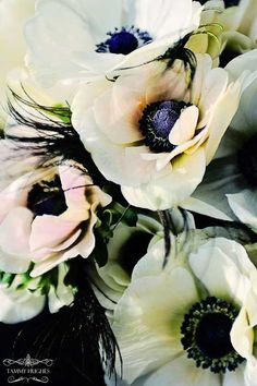 With your senses you will notice that you live your life right now - anemone ..love these flowers. They bring me back to my wedding day :)