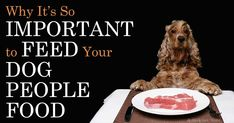 Steve Brown, founder of Steve's Real Food, discuss the problems with many of the diet formulations board-certified veterinary nutritionists rely on. http://healthypets.mercola.com/sites/healthypets/archive/2014/11/07/steve-brown-raw-pet-food-diet.aspx