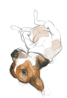 Spice on his back Watercolor Animals, Watercolor Paintings, Watercolour, Animal Paintings, Animal Drawings, Perros Jack Russell, Dog Portraits, Dog Art, Art Inspo