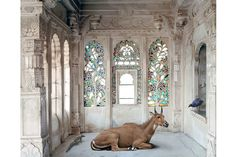 "The palaces of Rajasthan serve as backdrop to artist Karen Knorr's remarkable ""India Song"" project Photos 